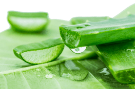 Aloe Vera Benefits for skin